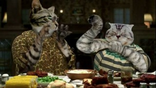 hollywood-game-night-nutty-professor-klumps-cats-web